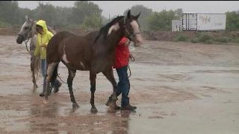 Community helps rescue animals during Colorado floods - kdvr.com | World news | Scoop.it