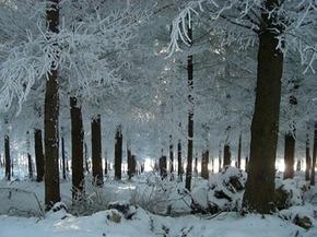 Dans les bois de Favasse - Alice calm | DESARTSONNANTS - CRÉATION SONORE ET ENVIRONNEMENT - ENVIRONMENTAL SOUND ART - PAYSAGES ET ECOLOGIE SONORE | Scoop.it