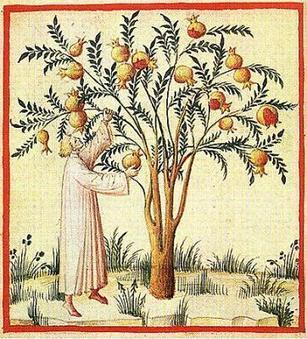 Pomegranates: symbolism in mysticism and dreams   death dreams   Scoop.it