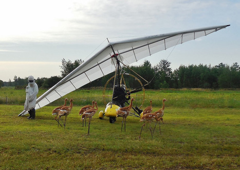 Whooping cranes ready for formation training - AOPA Pilot   Light Sport Aircraft   Scoop.it