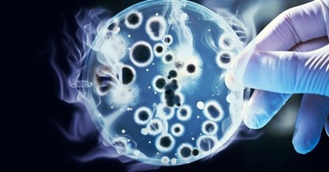 New Genetically Engineered Bacteria Could Help Combat Global Warming | MishMash | Scoop.it