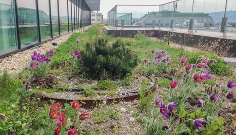 Resilient Cities - no better solution than green | Greenroofs & Urban biodiversity | Scoop.it