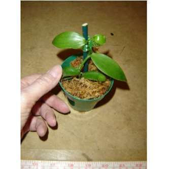 tropical-plants | News | Scoop.it