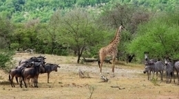 Uranio amenaza reserva de animales salvajes en Tanzania | Agua | Scoop.it