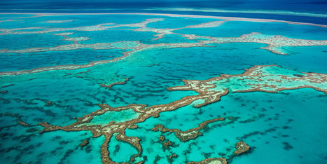 Scientists Hope Coral Reef Breeding Will Save Great Barrier Reef - Huffington Post | Amocean OceanScoops | Scoop.it