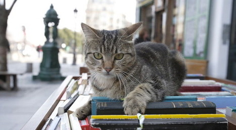 Literary  Hub | ebook publishing ideas | Scoop.it