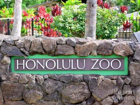 Top 10 things to do in Honolulu to make your Trip Memorable !! | My Travel Wall | Scoop.it