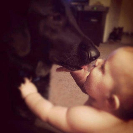 dog saves 7 month old from... | anonymous activist | Scoop.it