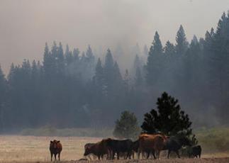 Calif. launches drone to combat Yosemite wildfire - CBS News | Les Volutiles | Scoop.it
