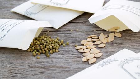 How to get free seeds for your first garden | School Gardening Resources | Scoop.it