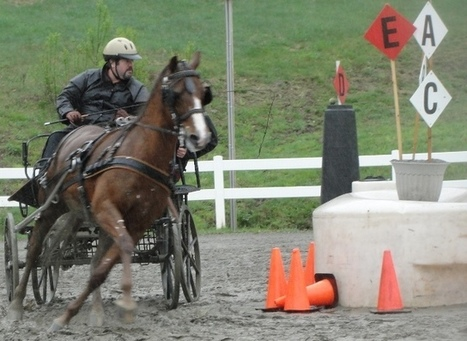 Blackhorse 4 Heroes - Blackhorse Competes, Connecticut Valley Driving Trial | Carriage Driving Radio Show | Scoop.it