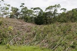 Des téléphones portables pour lutter contre la déforestation | Société durable | Scoop.it