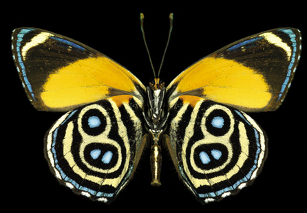 How butterflies' colorful wing patterns help them hide, lie, and impress the ladies. | Random Ephemera | Scoop.it