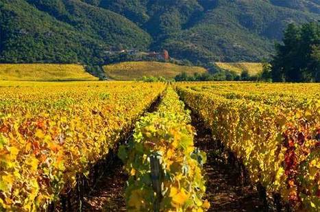 Anson on Thursday: Benchmark wines from #Chile | Vitabella Wine Daily Gossip | Scoop.it