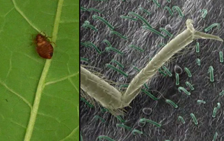 ScienceShot: How to Get Bedbugs to 'Leaf' You Alone - ScienceNOW | TeensScienceandSoul | Scoop.it