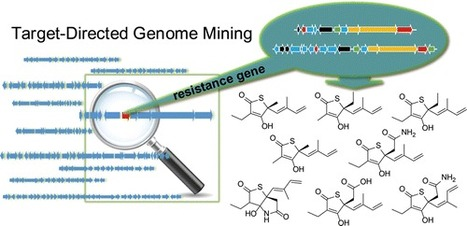 Identification of Thiotetronic Acid Antibiotic Biosynthetic Pathways by Target-directed Genome Mining | Natural Products Chemistry Breaking News | Scoop.it