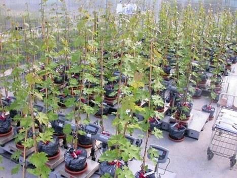 Les viticulteurs français devront faire évoluer leurs cépages, Conso - Distribution | Univers du vin | Scoop.it