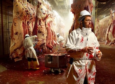 Killing for a Living: the Mentality of Slaughterhouse Workers | Veganism | Scoop.it