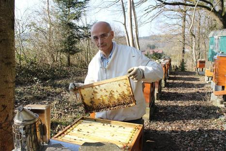Faszination Honigbiene - Zahl der Imker in der Region Biberach steigt - Schwäbische Zeitung | Maiselbiene | Scoop.it