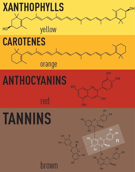 The Biochemistry Of Autumn Colors - World Science Festival | Ancient & Current Pure & Applied Chemistry | Scoop.it