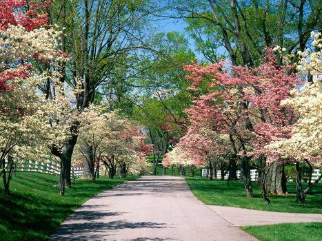 Audubon Park | Louisville Real Estate | Scoop.it