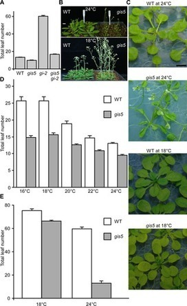 The  Arabidopsis  DNA Polymerase δ Has a Role in the Deposition of Transcriptionally Active Epigenetic Marks, Development and Flowering | plant molecular biology | Scoop.it