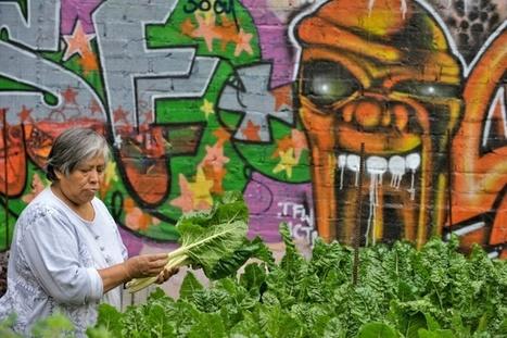 Agriculture urbaine: nourrir les villes, guérir les urbains | décroissance | Scoop.it