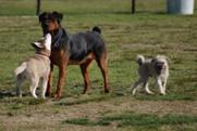 Empáticos y celosos: nuevos datos sobre la personalidad de los perros | Educacion, ecologia y TIC | Scoop.it
