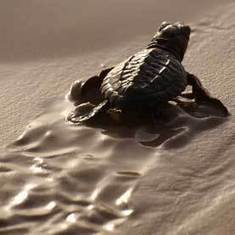 Long-lasting Chemicals May Harm Sea Turtles: Scientific American | Sustain Our Earth | Scoop.it