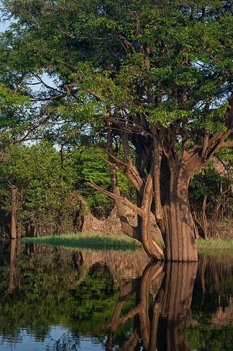 El Amazonas se está secando más rápido de lo que mostraba el informe del IPCC | Conciencia Eco | Autosostenibilidad en el mundo | Scoop.it