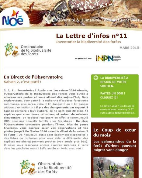 Observatoire de la Biodiversité des Forêts : La Lettre d'info de Mars est en ligne !   Insect Archive   Scoop.it
