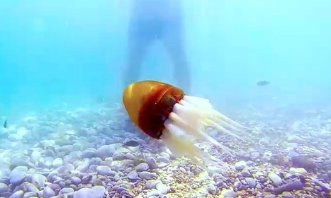 Robot Octopus Takes to the Sea | Tout est relatant | Scoop.it
