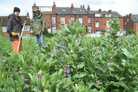 Urban Agriculture - part seven - Leeds | Économie circulaire locale et résiliente pour nourrir la ville | Scoop.it