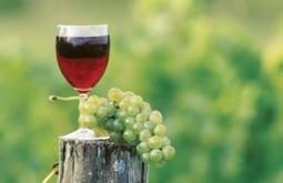 Le vin rouge aurait des vertus protectrices de l'audition - Journal Du Canada | Vins | Scoop.it