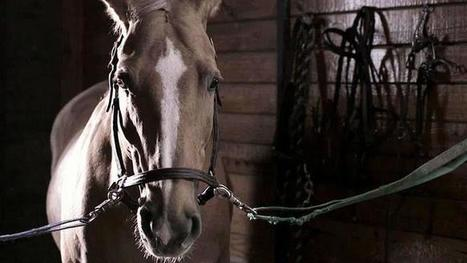 Psychic Horse Video : Mysteries at the Museum : Travel Channel | Pet Sitter Picks | Scoop.it
