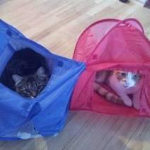 Ce chat n'est pas près de faire du camping ! (Photos) | CaniCatNews-actualité | Scoop.it