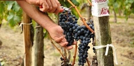 Robert Parker dézingue les bordeaux 2011 | Wine website, Wine magazine...What's Hot Today on Wine Blogs? | Scoop.it