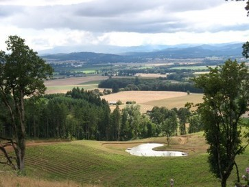 Washington yields down, Oregon up as harvest finishes | Vitabella Wine Daily Gossip | Scoop.it