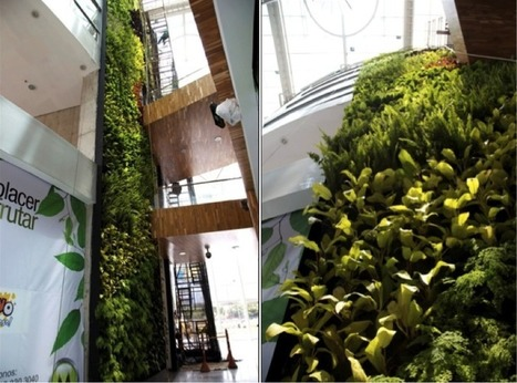 Consejo Colombiano de Construcción Sostenible - Jardines verticales en Bogotá | Jardines Verticales y azoteas verdes. | Scoop.it