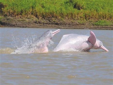 El Bita, el río que es la nueva joya de la Orinoquia colombiana - Ciencia - El Tiempo | Agua | Scoop.it
