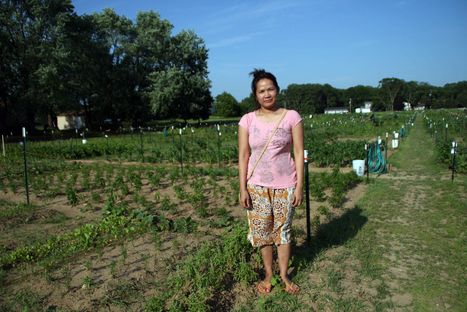 Burmese Karen and Hmong refugees make Maplewood the land of a thousand gardens | Vertical Farm - Food Factory | Scoop.it