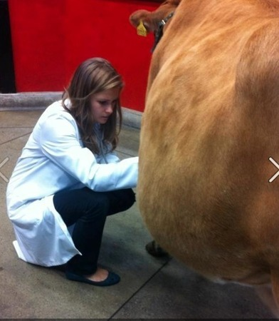 covered in cow poop: a day in the life of a vet student | Veterinary Students | Scoop.it