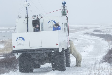 A virtual visit to polar bears, courtesy of Google Maps | Virtual tours, visite virtuelle, google visit pro | Scoop.it
