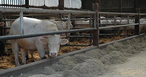 L'alimentation, un levier de rentabilité | Actualités de l'élevage | Scoop.it