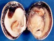 Les aliments qui ressemblent aux organes qu'ils guérissent - preserve ta sante   Cette nature qui nous soigne   Scoop.it