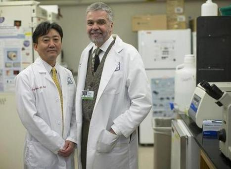 Research on stem cells transforming sciences - Boston Globe | Biology | Scoop.it