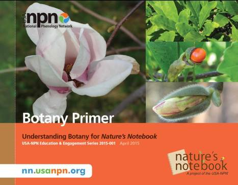 USA National Phenology Network - Botany Primer | Plant Biology Teaching Resources (Higher Education) | Scoop.it