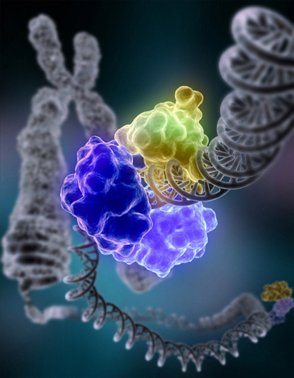 Frozen bacteria repair their DNA at -15ºC | Amazing Science | Scoop.it