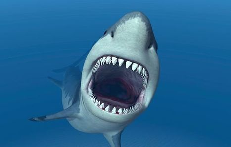 DDT found in great whites | Sustain Our Earth | Scoop.it