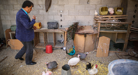 Why one Gazan turned destroyed home into a zoo - Al-Monitor: the Pulse of the Middle East   enjoy yourself   Scoop.it
